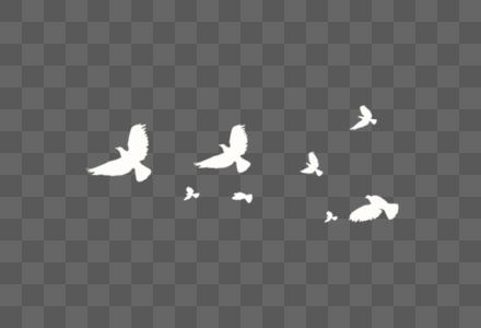 飞翔的鸽子图片