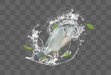 创意生鲜鱼图片