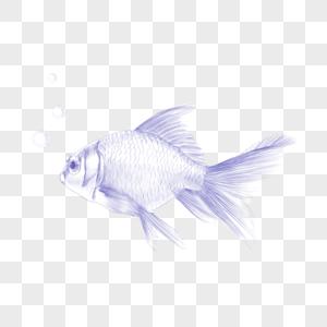 金鱼素描圆珠笔风格图片
