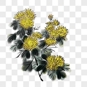 水墨菊图片