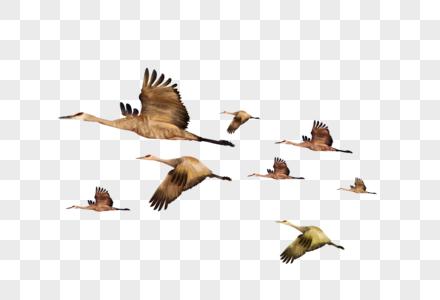 雁南飞图片