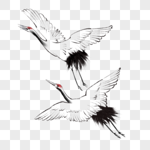 中国风水墨画飞天鹤图片