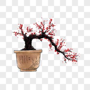 手绘红梅盆栽图片