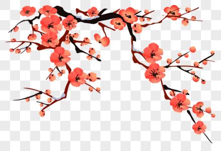 红色腊梅树图片