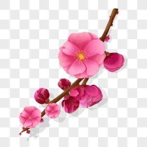 重瓣腊重瓣腊梅花图片
