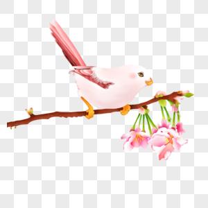 鸟儿站在花开树枝上图片