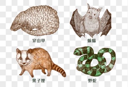 手绘素描野生动物图片