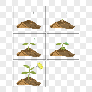 春羽发芽过程图片
