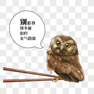 禁食野味猫头鹰图片