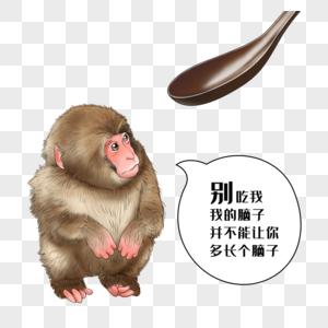 禁食野味猴子图片