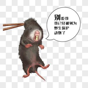 禁食野味野生竹鼠图片