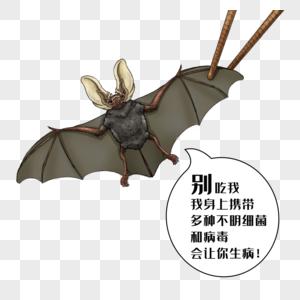 禁食野味蝙蝠图片