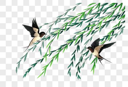 燕子与柳树图片