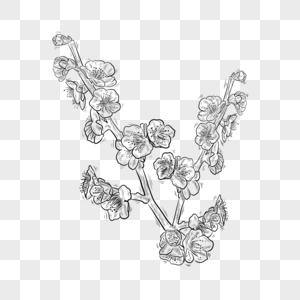 黑白线条植物花卉梅花图片