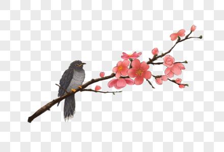书上的布谷鸟图片
