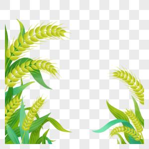 手绘绿色粮食小麦图片