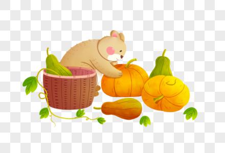 立秋小熊摘南瓜图片