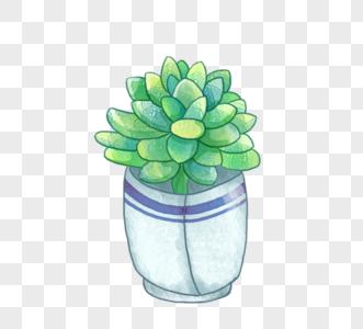 蓝色盆栽绿色植物多肉植物图片