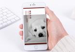 爱护动物手机海报配图图片