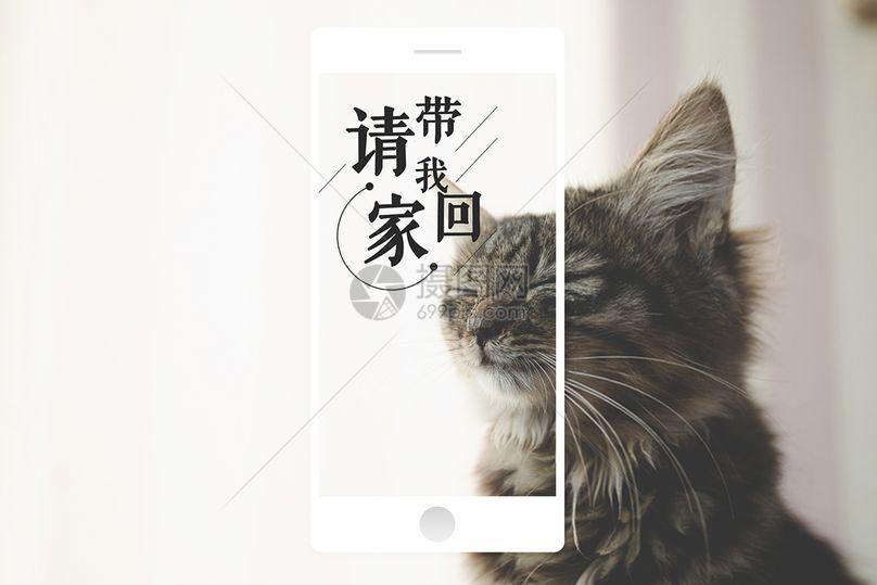 宠物手机海报配图图片