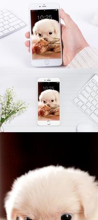 小狗手机壁纸图片