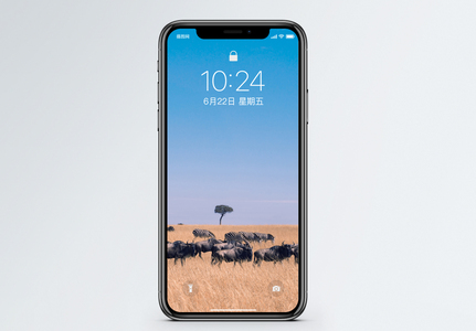 大草原斑马手机壁纸图片