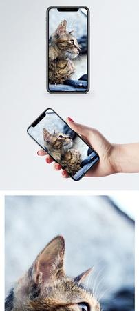 动物手机壁纸图片