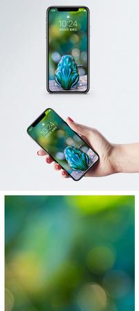 青蛙玩具手机壁纸图片