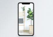小清新手机壁纸图片