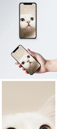 好奇猫咪手机壁纸图片