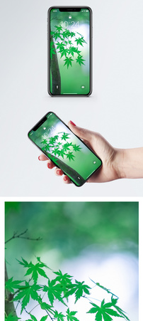 早秋的枫叶手机壁纸图片