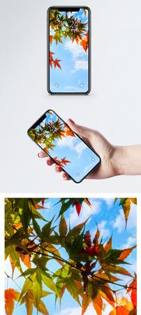 蓝天下的红色枫叶手机壁纸图片