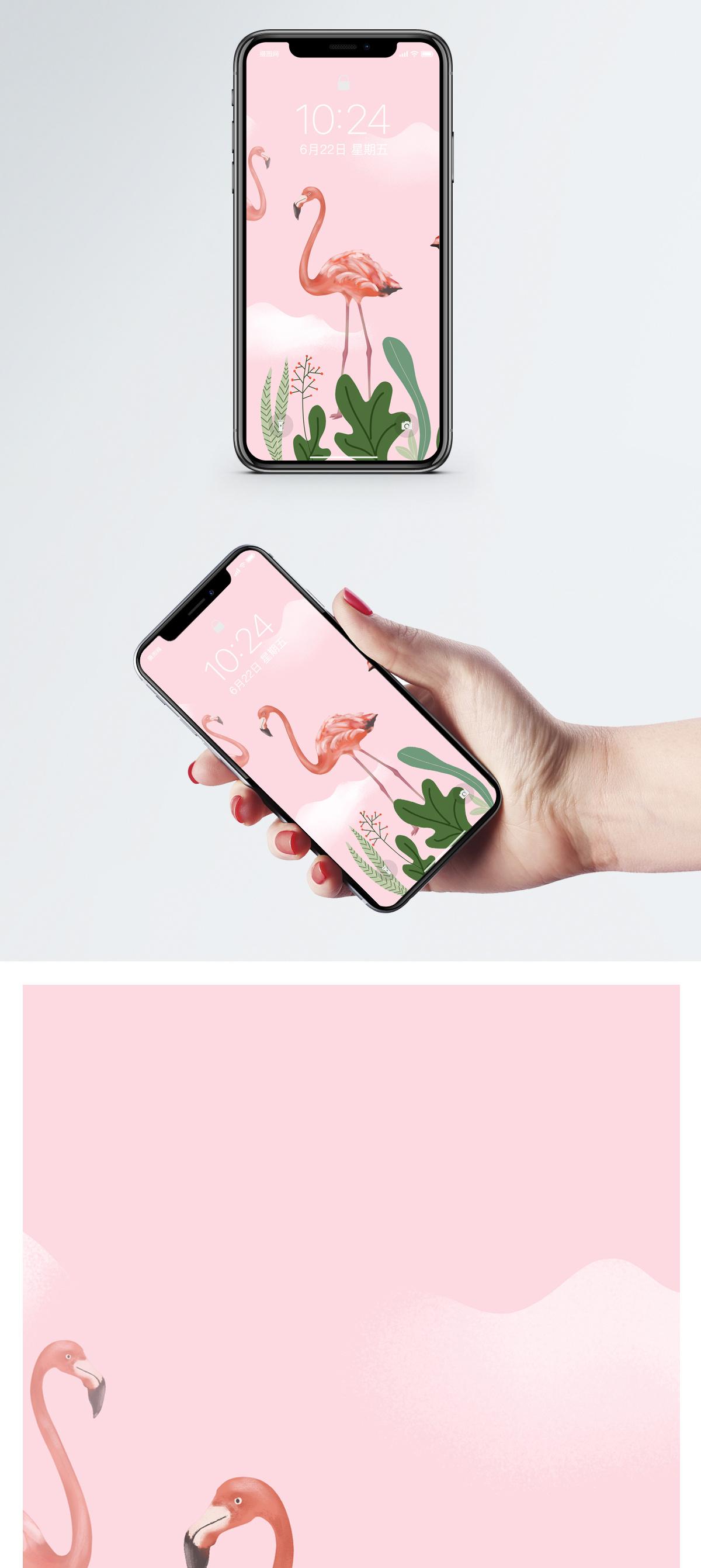 火烈鸟手机壁纸图片