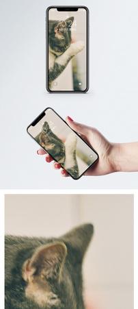 拿手洗脸的猫手机壁纸图片