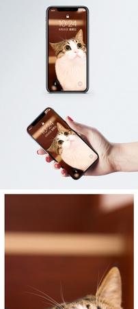 圆眼睛的猫手机壁纸图片