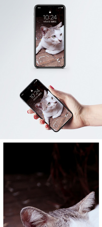 户外坐地板的猫手机壁纸图片