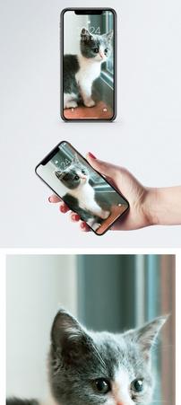 看窗外的猫手机壁纸图片