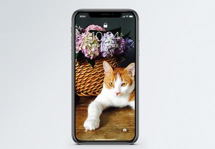 花和猫手机壁纸图片