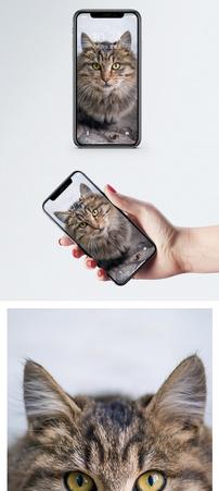 黄眼睛猫手机壁纸图片