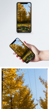 秋日银杏手机壁纸图片