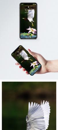 风景动物手机壁纸图片