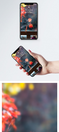 枫叶手机壁纸图片