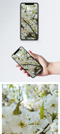 苹果花手机壁纸图片