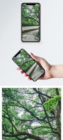 花草树木手机壁纸图片