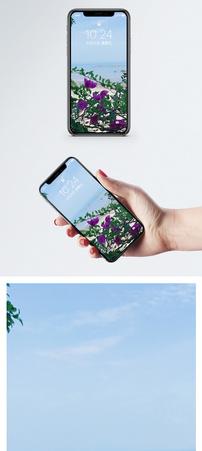 蓝天鲜花手机壁纸图片