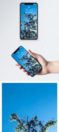 蓝天绿树手机壁纸图片