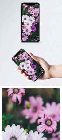 花草植物手机壁纸图片