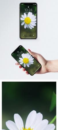 小雏菊手机壁纸图片