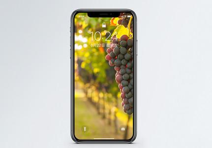 法国波尔多葡萄手机壁纸图片