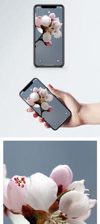 山桃花手机壁纸图片